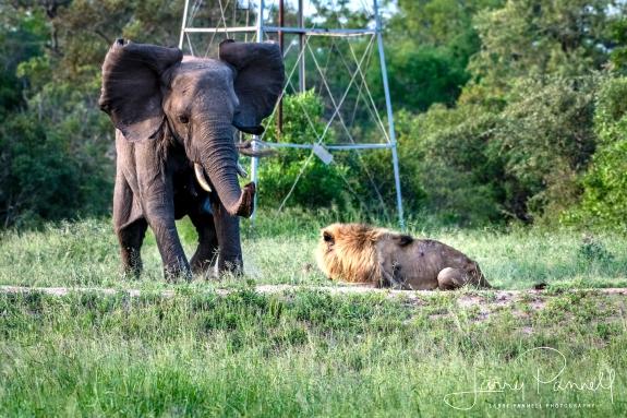 elephant charge 1_190