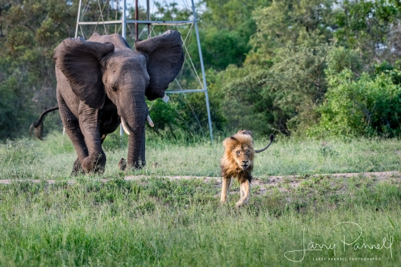 elephant charge 2_190