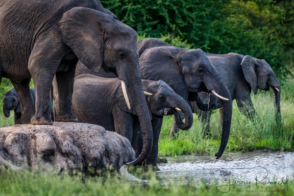 elephant water hole 1_190