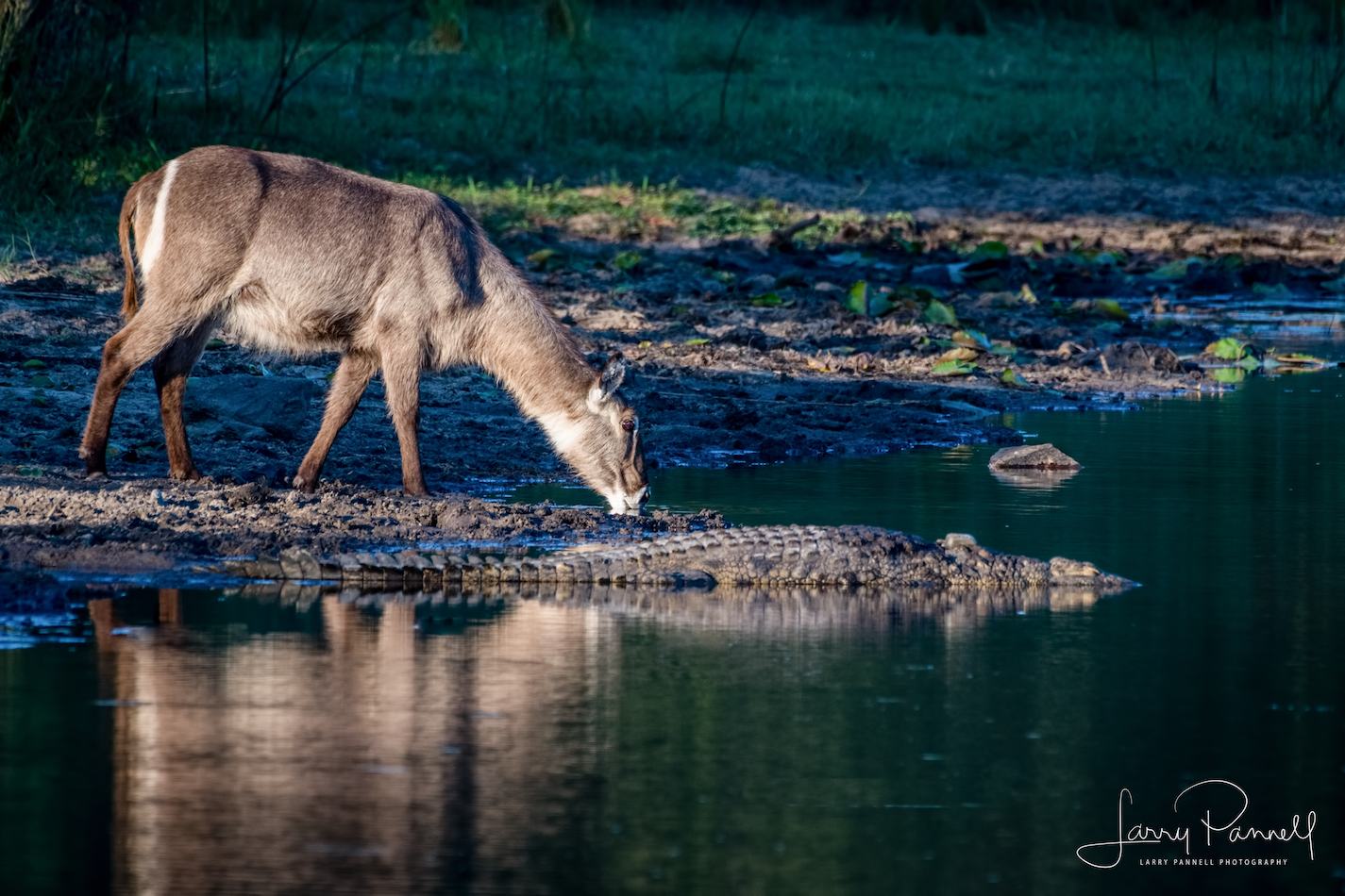 waterbok_croc_kruger1 copy