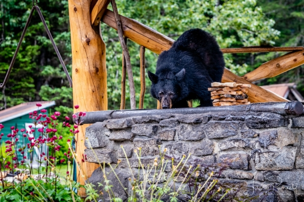 taku_bear2