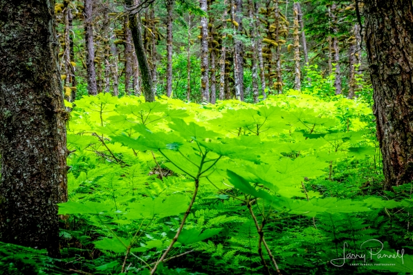 taku_forest1