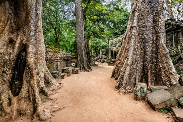 dcs 1342 ta prohm path copy