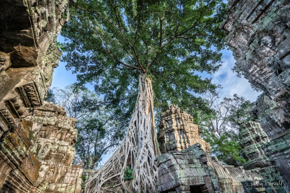 dcs 1433 ta prohm tree copy