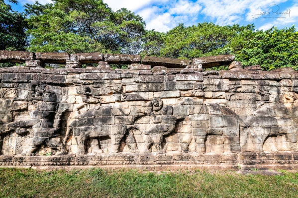 DSC_2742 elephant terrace_190