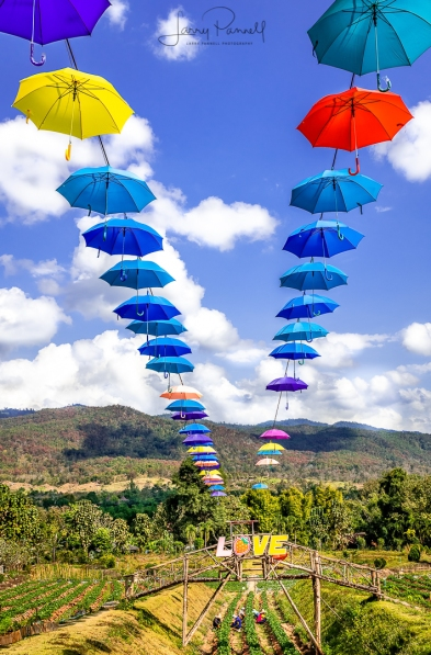 DSC 3821 pai umbrellas