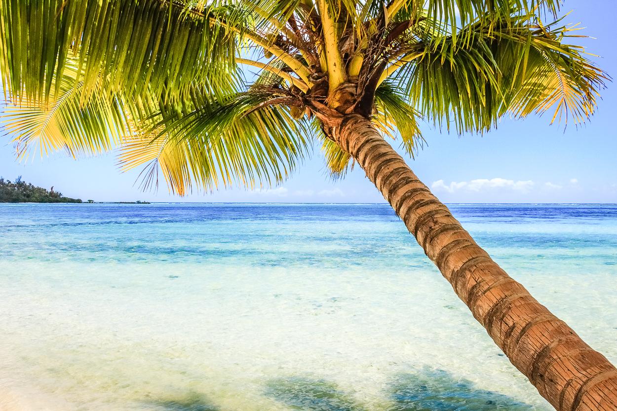 DSC 0007 moorea palm