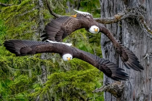 DSC_8079 double eagle