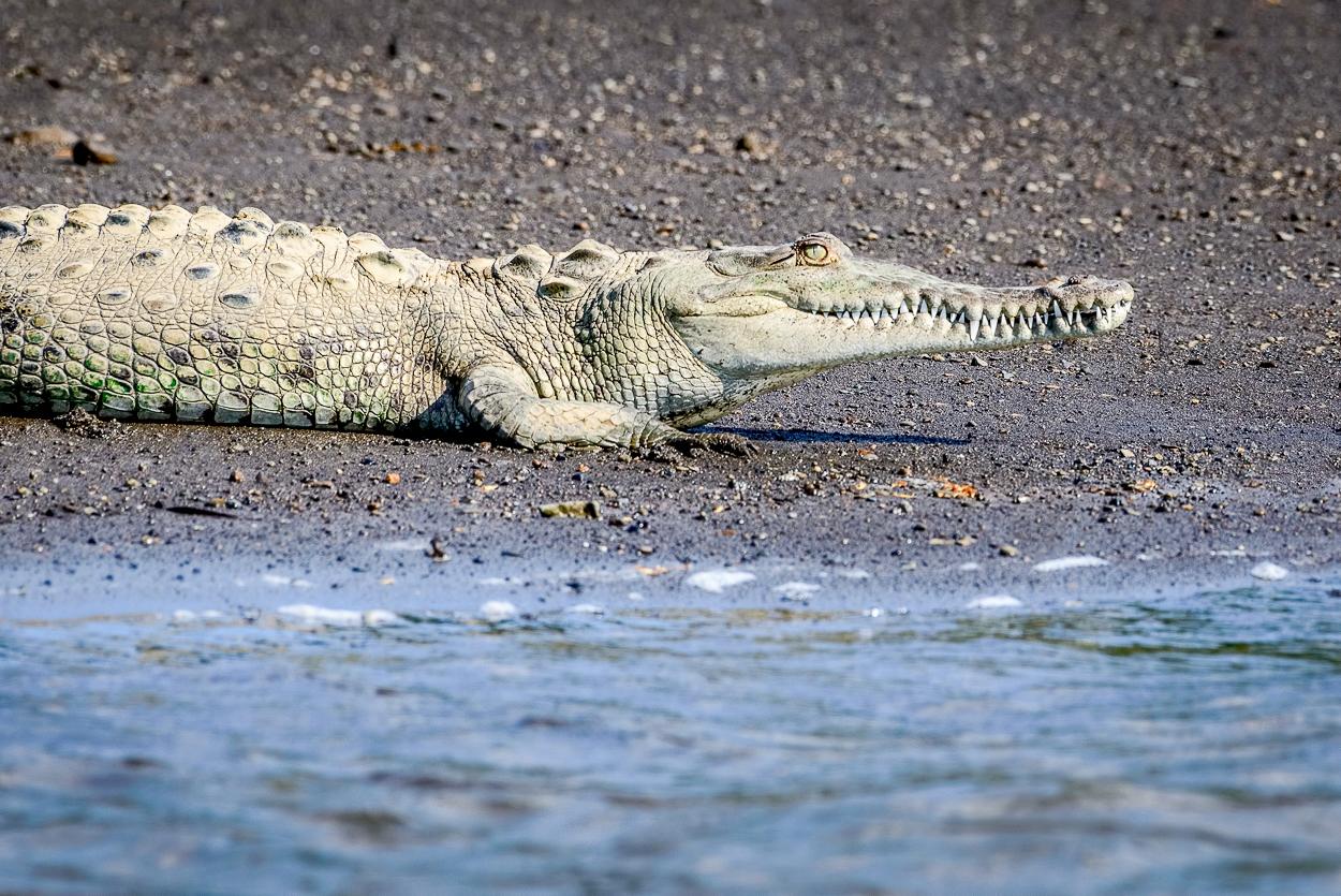 DSC_6598 torcoles croc