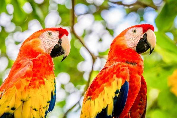 DSC_6636 macaws